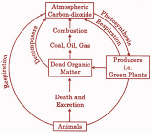 The Carbon Cycle Diagram.Explain The Following Cycles In Your Own Words With Suitable
