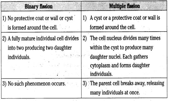How Does Binary Fission Differ From Multiple Fission