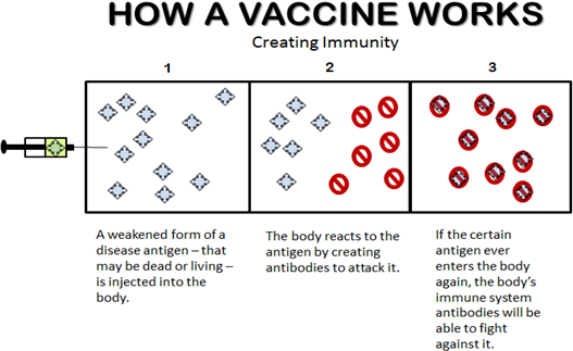 how-a-vaccine-works-good.png