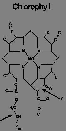 Hemoglobin-Chlorophyll.svg.png