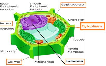 Draw plant cell and label the parts which (a) Determine ...