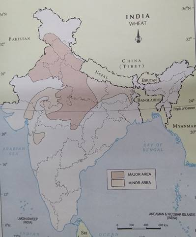 On an outline map of India, show wheat-producing areas. Show India Map on korea map, karnataka map, texas map, time zone map, europe map, maharashtra map, indian subcontinent map, arabian sea map, california map, japan map, france map, andhra pradesh map, sri lanka map, canada map, russia map, australia map, china map, brazil map, africa map,